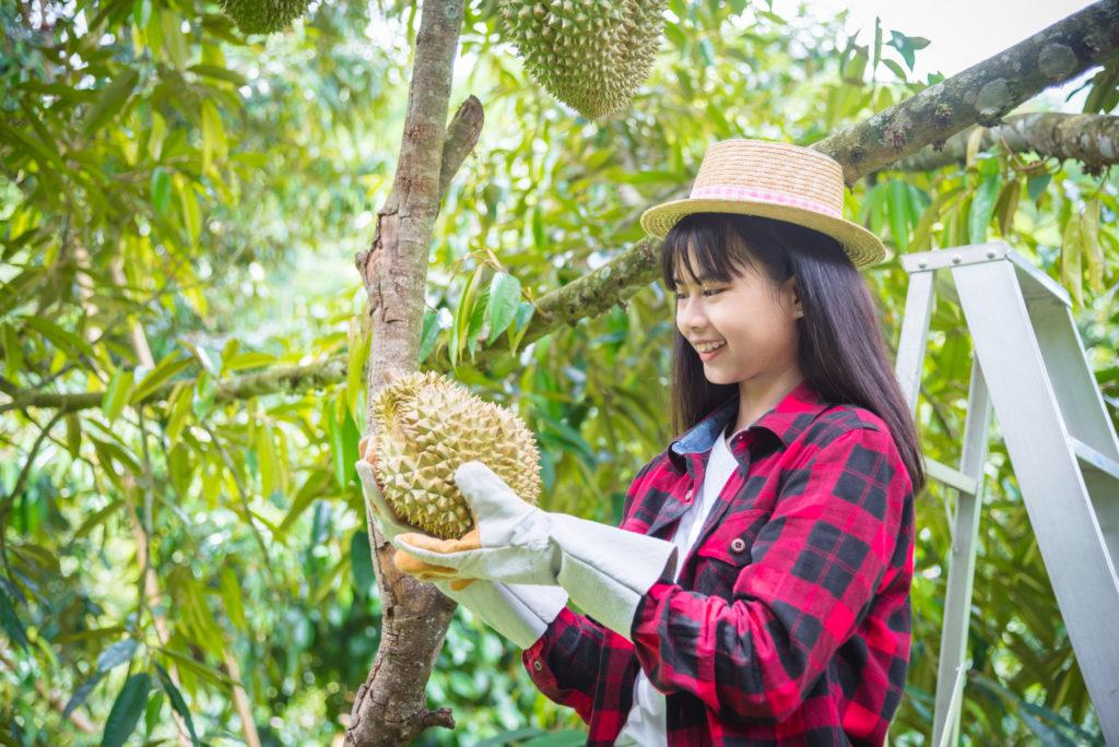 une agricultrice asiatique tient et regarde un durian dans son jardin et sourit joyeusement